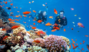 Taucher am Korallenriff