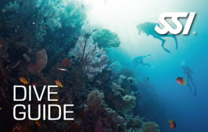 Kurs Dive Guide